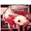 255-pink-axolotl.png