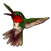 259-red-throated-hummingbird.png