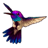 260-blue-throated-hummingbird.png