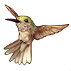 261-brown-hummingbird.png