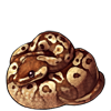 271-normal-ball-python.png
