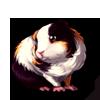 279-dutch-guinea-pig.png