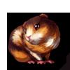 280-tortie-guinea-pig.png