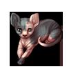 297-tuxedo-sphinx-cat.png