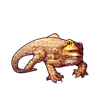 307-brown-bearded-dragon.png