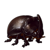 476-stag-ladybird.png