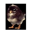 499-gray-meep.png