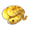 514-albino-hognose.png