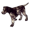 526-brindled-english-pointer.png