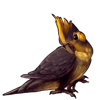 588-gold-crested-cockatiel.png