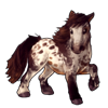 591-appaloosa-shetland-pony.png