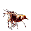 595-tiger-shrimplet.png