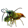 596-mantis-shrimplet.png