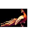 751-phoenix-fire-peacock.png