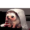 784-comfy-hedgehog.png