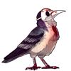 866-bleeding-heart-plague-bird.png