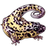 871-leopard-gecko.png