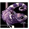 872-gargoyle-gecko.png