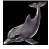 874-gray-sonarphin.png