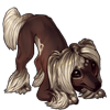 878-choconilla-crested-pup.png