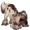 879-cocoa-dusted-crested-pup.png