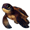 1009-cave-sea-tortle.png