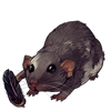 1025-feather-friend-dumbo-rat.png