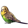 1078-natural-green-budgie.png