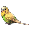 1079-light-green-opaline-budgie.png
