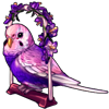 1080-lovely-lilac-budgie.png