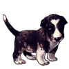 1110-tuxedo-marble-bully-pup.png