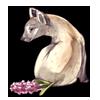 1231-imperial-hyenacinth.png