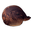 1248-freckled-sealorb.png