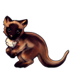 1266-chocolate-point-tree-kangaroo.png