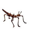 1299-autumn-phasmid.png
