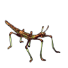 1300-forest-decay-phasmid.png