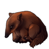 1388-brown-anteater-pup.png
