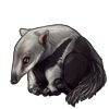 1389-giant-anteater-pup.png