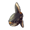 1423-spotty-sunfish.png