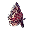 1424-fancy-sunfish.png