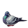 1453-rock-dove.png