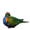 1455-fruit-dove.png