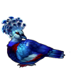 1456-crowned-dove.png