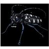 1509-citrus-longhorn-beetle.png