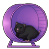 1518-purple-wheel-wheelster.png