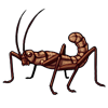 1524-brown-stick-bug.png