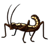 1525-striped-stick-bug.png