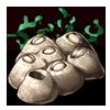 107-barnacles.png