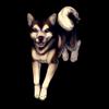 453-husky-doge.png