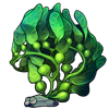 487-pea-algae.png